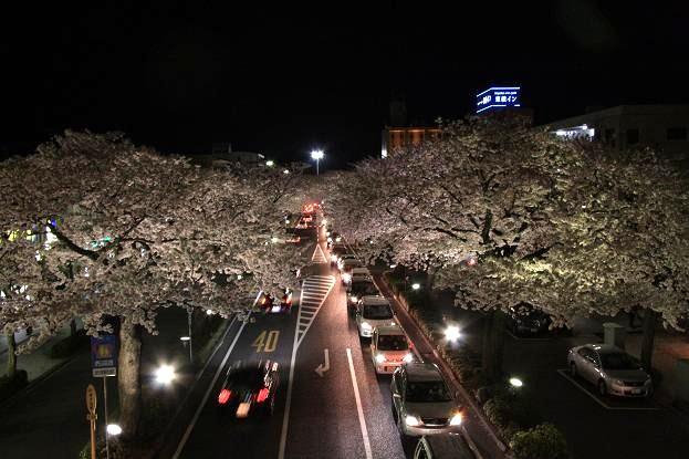 21 4月10日夜桜 100