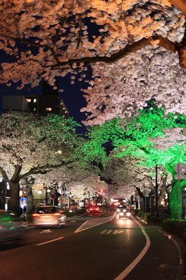 21 4月10日夜桜 076