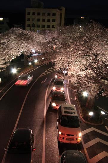 21 4月10日夜桜 086