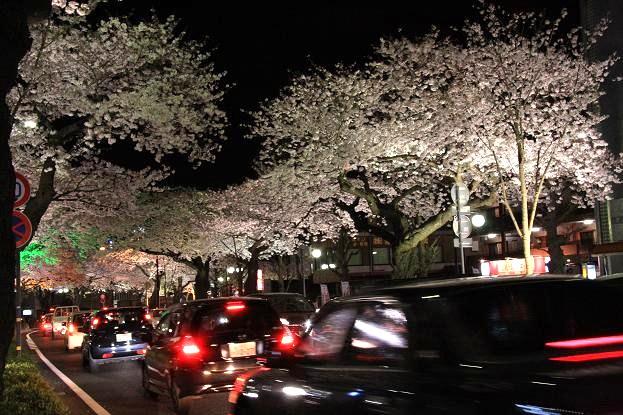 21 4月10日夜桜 120