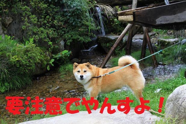 21 京都2 221