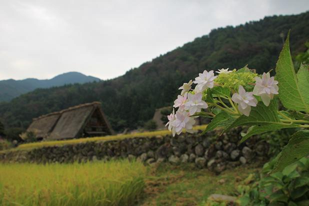 21 京都2 154