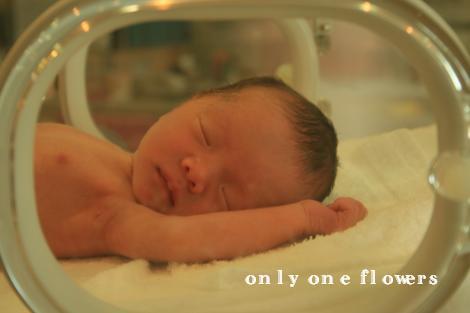 生まれた日の一花
