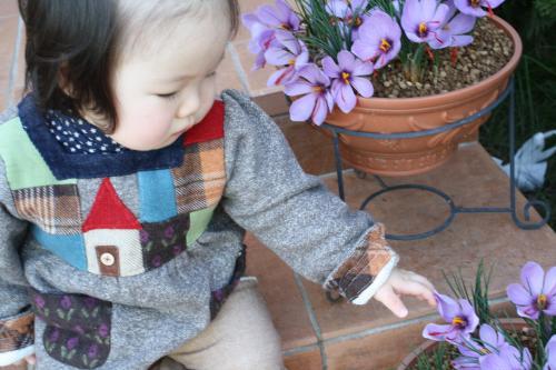 球根から お花が咲いたよっ♪