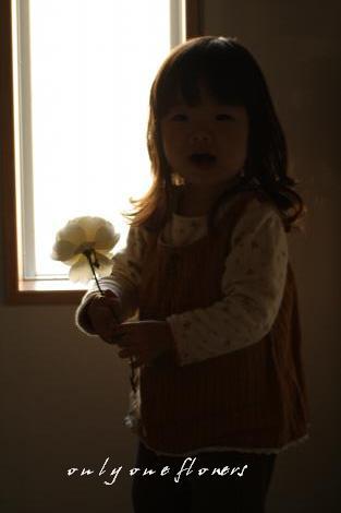 いちとお庭に咲いた白いバラ