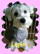 Lupinしゃん♥