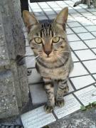 cat050925.jpg