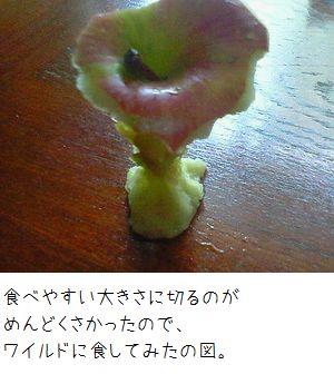 一応、リンゴです