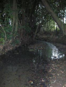 そのままの柳瀬川