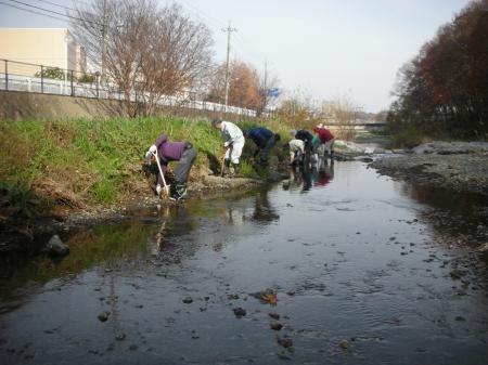 河床への植栽