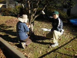 小さな木すべて計測