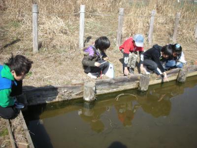 下宿ビオトープ池