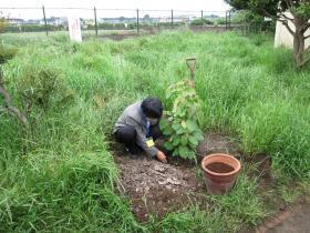 ハンカチノキ植樹