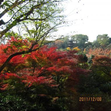 IMG_0797_椿山荘1convert_20111215120922