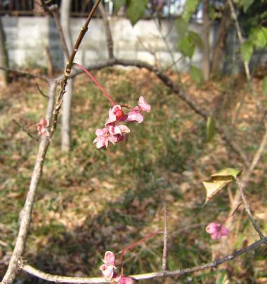 木の実IMG_0984_convert_20120102130254
