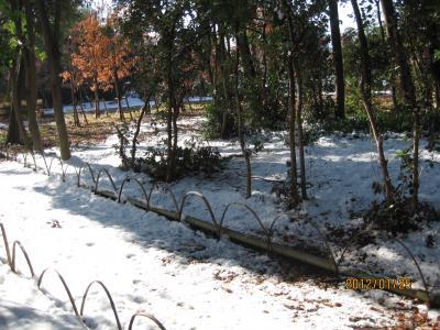 IMG_0107雪の日_convert_20120126004608