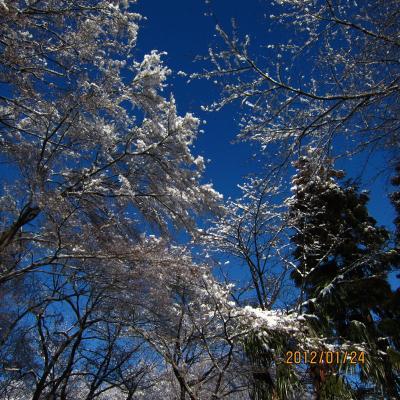 3IMG_1270雪の日_convert_20120126005427