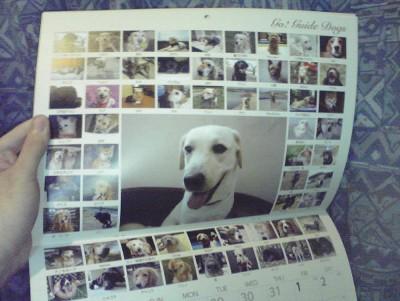 盲導犬応援カレンダー