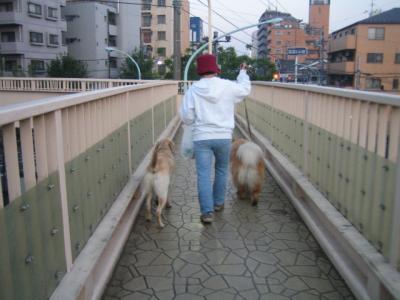 よく友達ハナちゃんを追いかけてのぼって歩いた歩道橋
