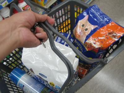 子猫の食事はあまりわかりません