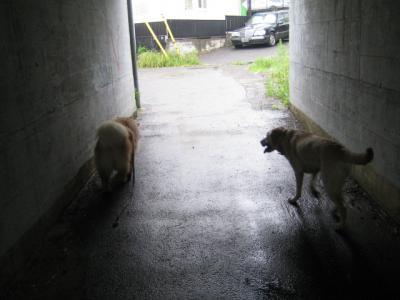 もん太とルイ・ニャンコロード手前の小トンネルにて