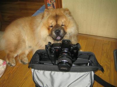 カメラともん太