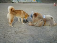 もん太、水飲み場の番犬