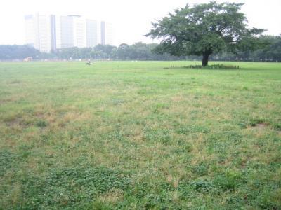 大きい公園