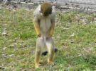 ごめんなさい猿