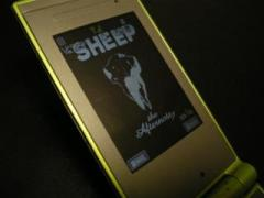 sheep_display