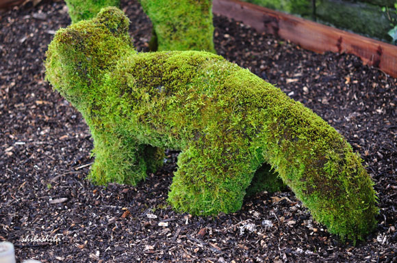 苔の動物園