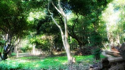 チョロの森