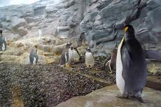 かわいい♪ペンギン