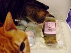ネコと桜餅