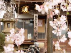 千手院夜桜18