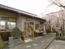 千手院夜桜20