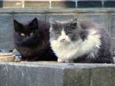 稲荷神社にいたネコ