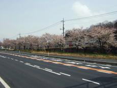 桜 R54ホシザキ電機あたり