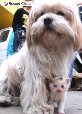 猫を育てる犬