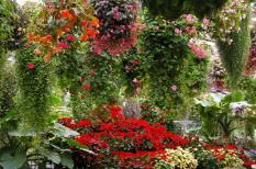 花鳥園12