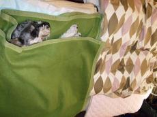 ヒデくんのベッド