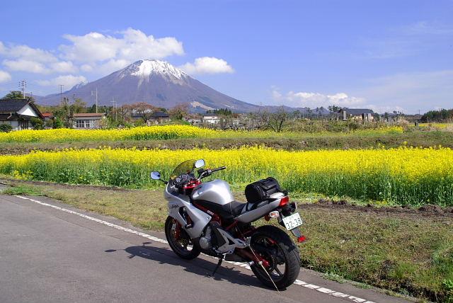 菜の花と大山