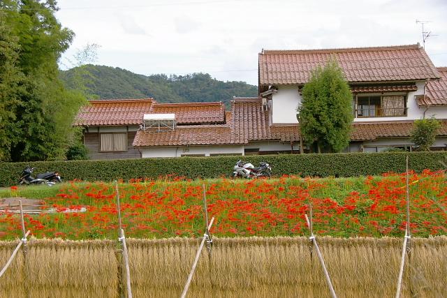 田舎の風景♪