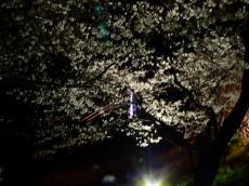 木次の夜桜