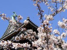 松江城と桜アップ