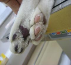 猫の塞栓症2