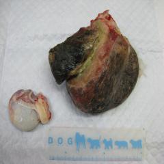 精巣上皮腫 オペ後 腫瘍塊