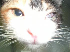 FVR 猫.