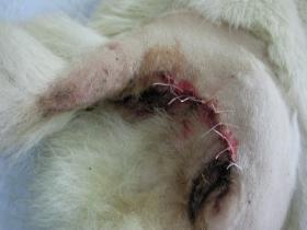 輸血の腫瘍 オペ後