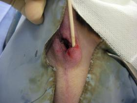 肛門腺 オペ前